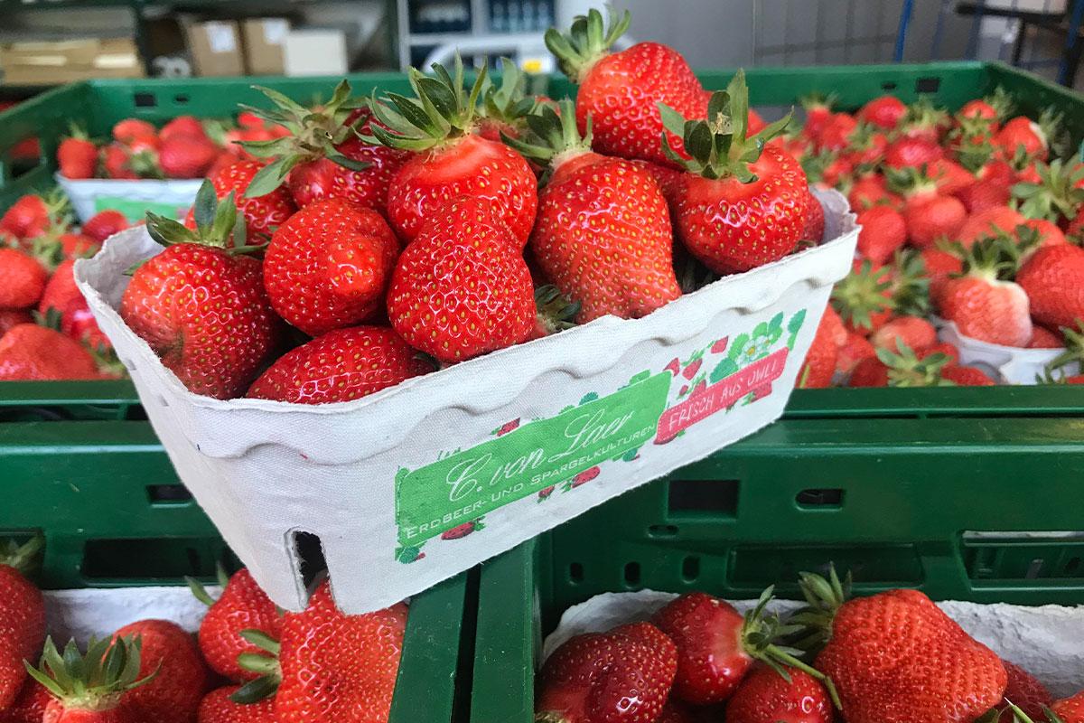 Erdbeeren Lippe