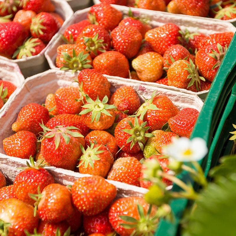 Großhandel Spargel und Erdbeeren Herford